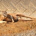 怠ける動物 Lazy animals