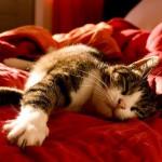 睡眠 Sleep